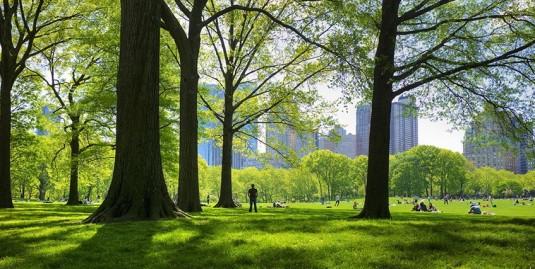 climate-pledge-park-area