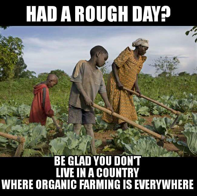More on #Africa is organic