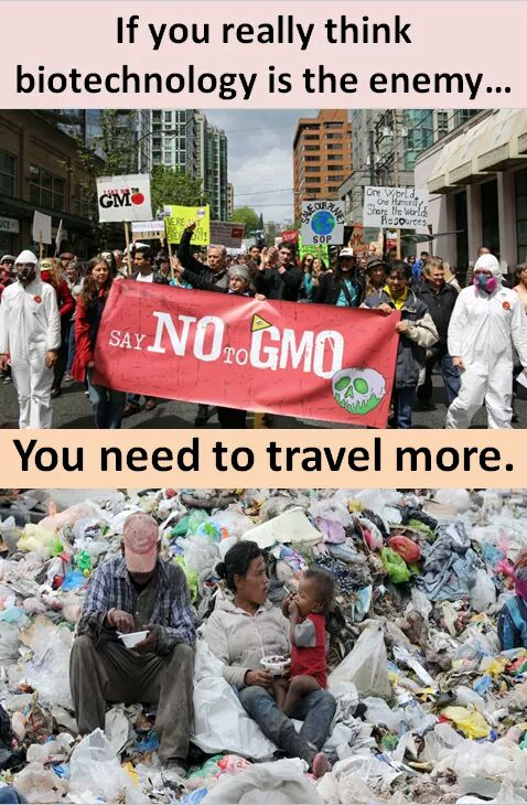Travel rarely broadens the environmentalist mind #GMO